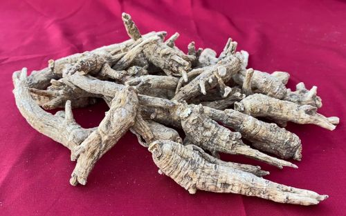 Cultivated Large Wisconsin Ginseng Roots