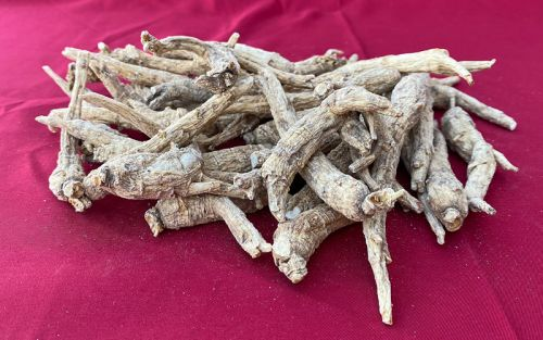 Cultivated Small Wisconsin Ginseng Roots