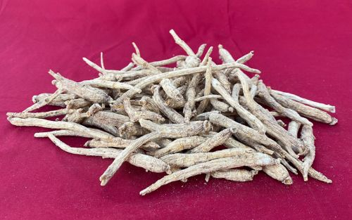 Cultivated Small w/Prongs Wisconsin Ginseng Roots